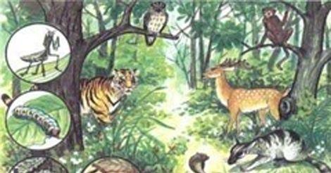 Quần xã sinh vật rừng mưa nhiệt đới